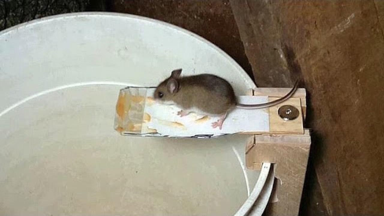 ネズミの画像 p1_29