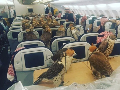 a-bizarre-photo-of-80-giant-birds-on-a-plane-is-taking-over-the-internet--but-it-isnt-as-strange-as-you-think