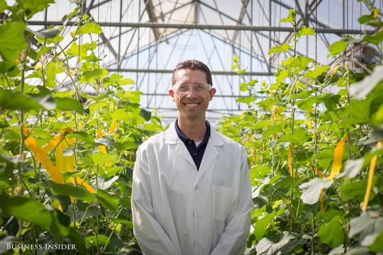 遺伝子組み換え作物の巨人、モンサントが取り組む「昔ながらの品種改良」