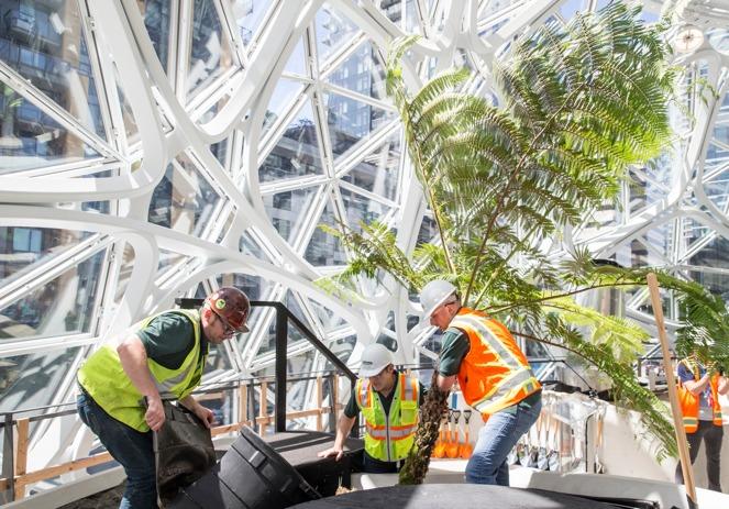 「スフィア」内部にて、複数の作業員がソテツのような南国風の植物を植え込んでいる様子