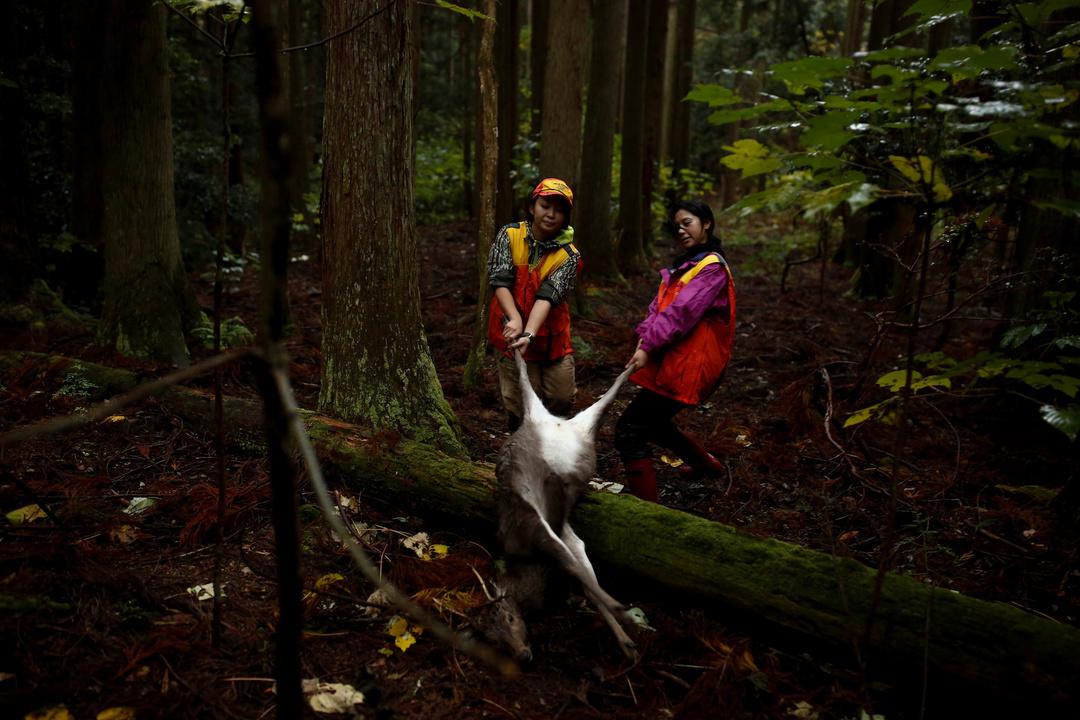 仕留めたシカを運ぶ女性猟師