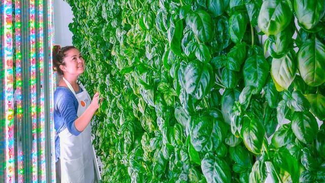 """ソフトバンクも投資する""""インドア農業"""" —— 食料革命に期待高まる"""