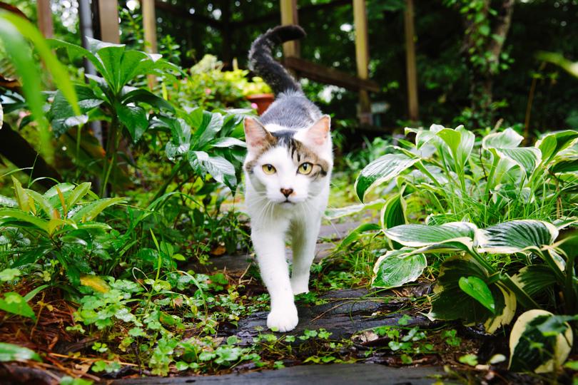 松島さん宅の猫