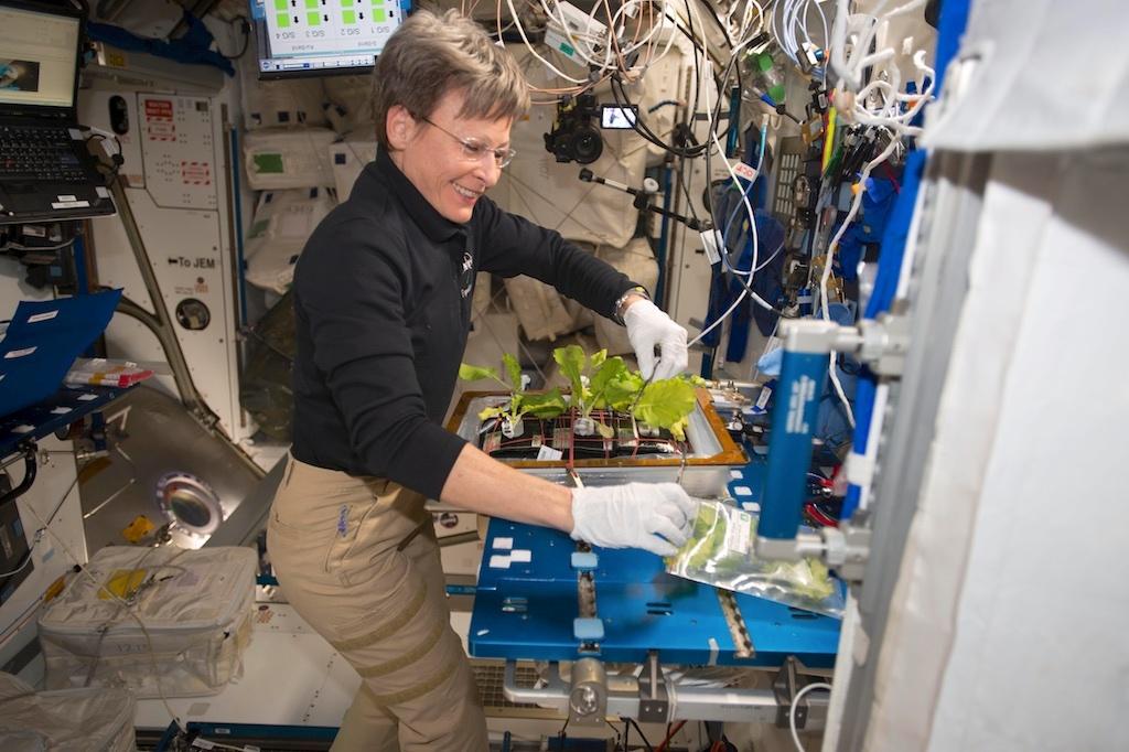 国際宇宙ステーションの野菜栽培プロジェクト風景