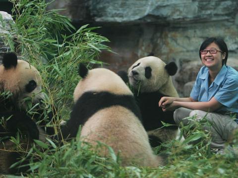 パンダの世話からビールの飲み歩きまで —— 本当にあった夢のような仕事