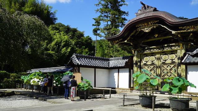 大企業も取り入れるマインドフルネス——鎌倉のイベントに大勢参加したのはあの職業