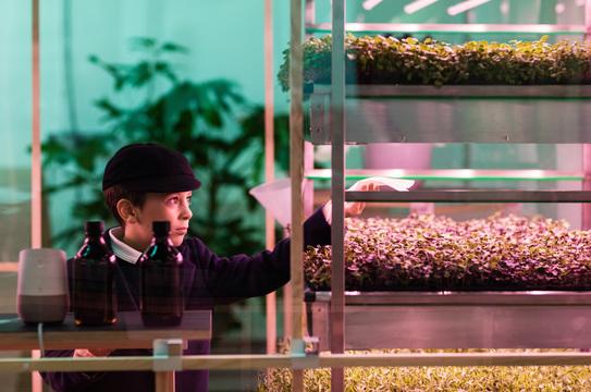 イケア、3倍早く作物が育つ屋内ミニ農園を発表