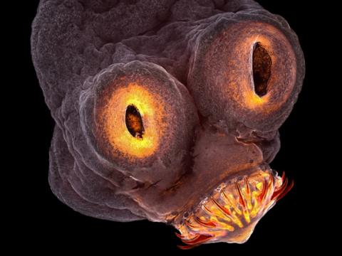 20枚の顕微鏡写真が誘う、手の届かない奇想天外な世界とは