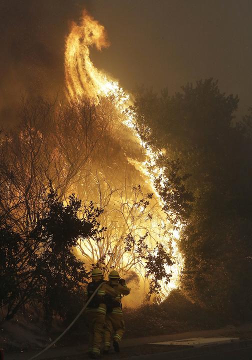 木を包む炎