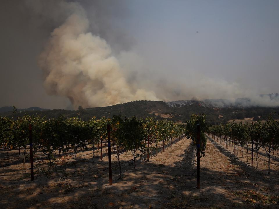 ソノマ郡のワイン畑