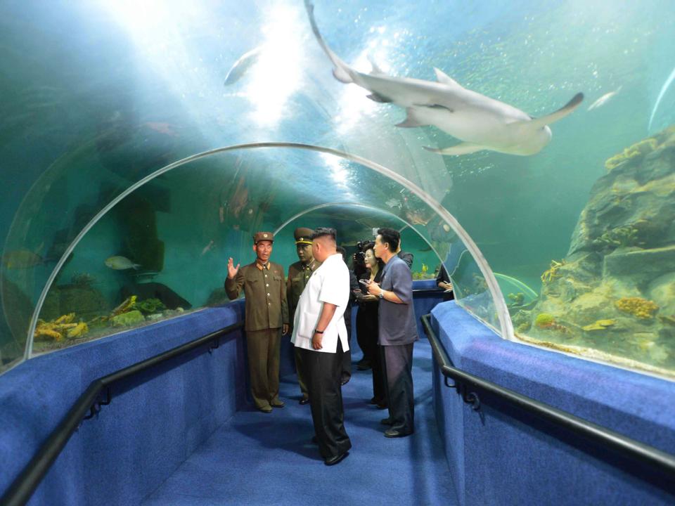 水族館を訪れる金正恩氏