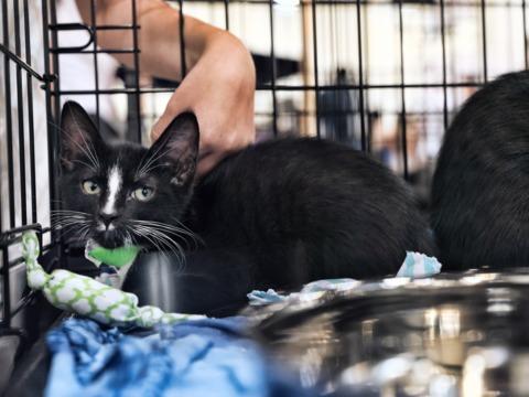 保護動物以外の販売は禁止! カリフォルニア州がペットショップに規制