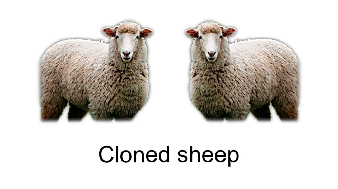 クローン羊