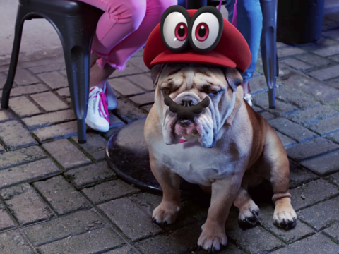 マリオのコスチュームを付けた犬