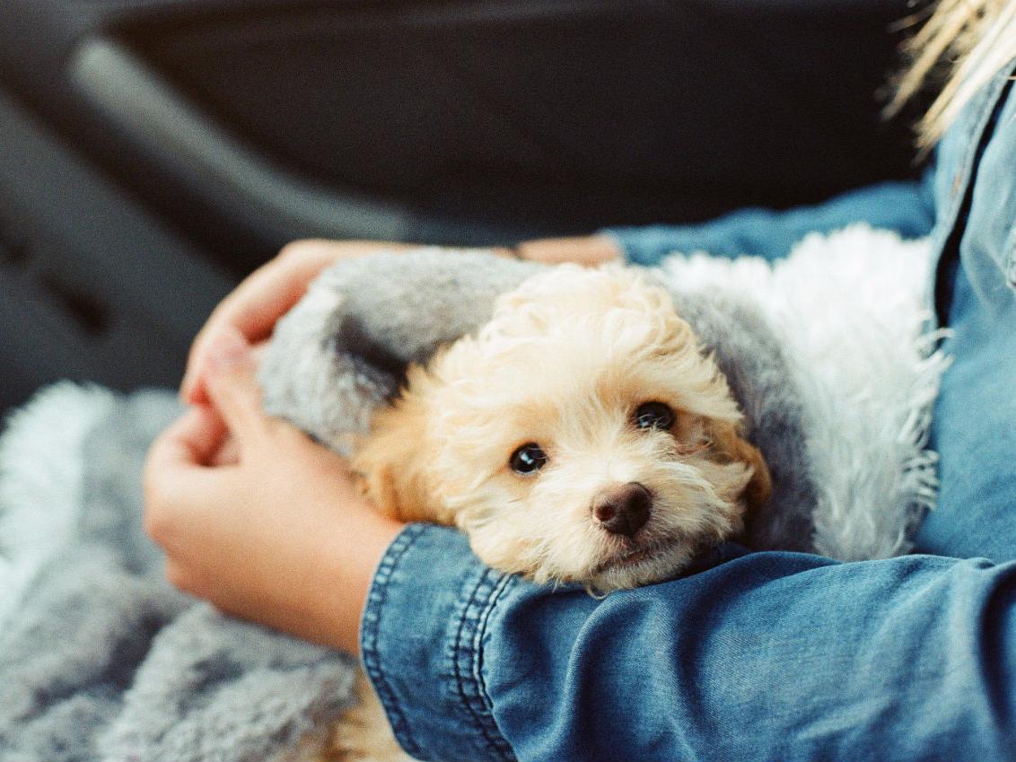 人に抱かれる毛深い犬