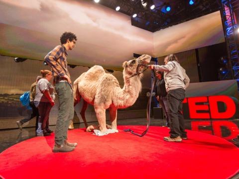 TEDトークのステージ上のラクダ