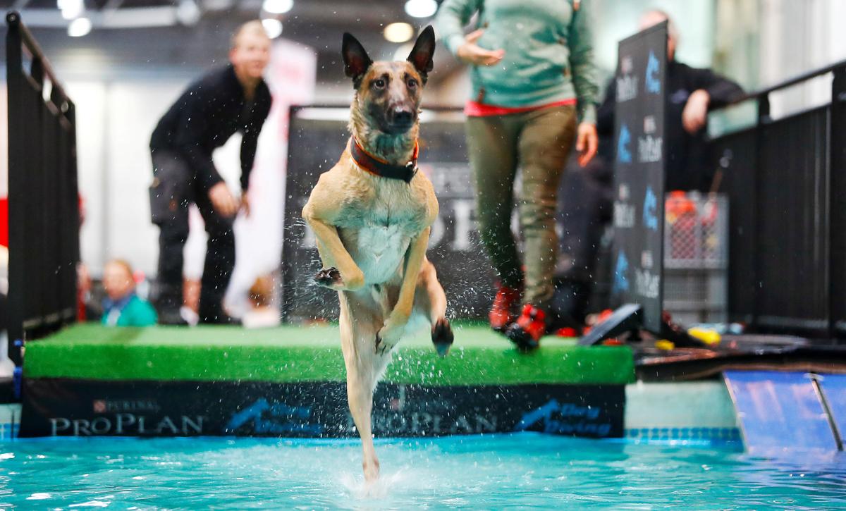 水に飛び込む犬