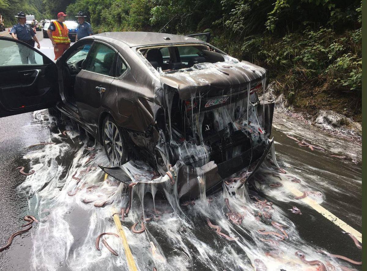 高速道路を覆うヌタウナギ