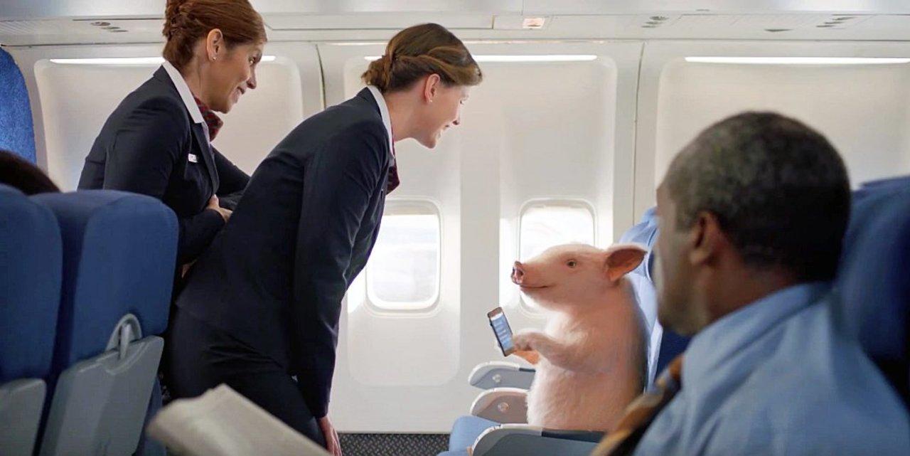 飛行機に乗った豚