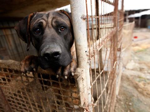 五輪期間中は犬肉の提供を自粛して! 政府の要請に平昌の飲食店は反発
