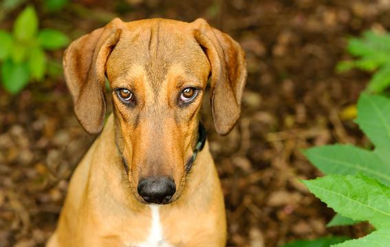犬を飼っているなら、やってはいけないことをやってしまった時の犬の表情を知っているはず。