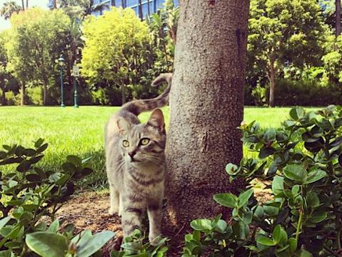 ディズニーランドの猫