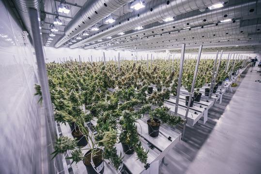 医療用大麻を製造するカナダのキャノピー・グロースは、ニューヨーク証券取引所への上場を申請した。