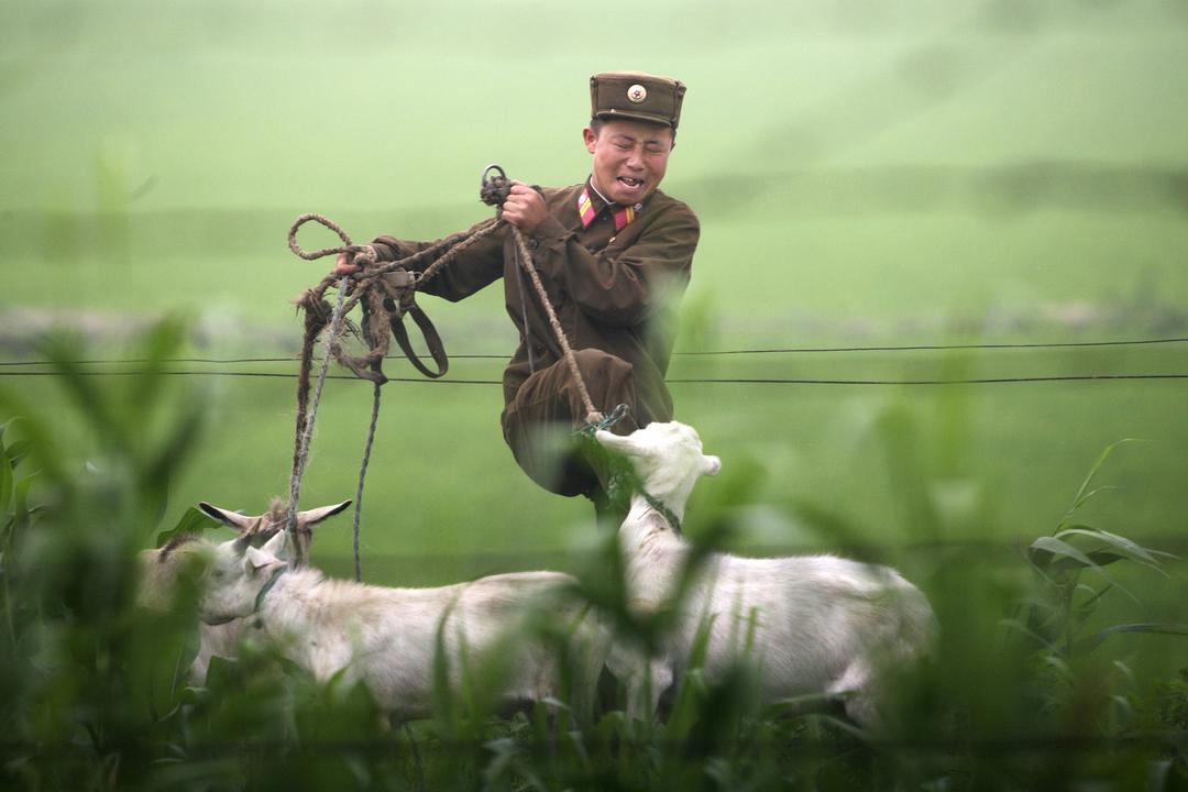 ヤギを蹴る北朝鮮兵士