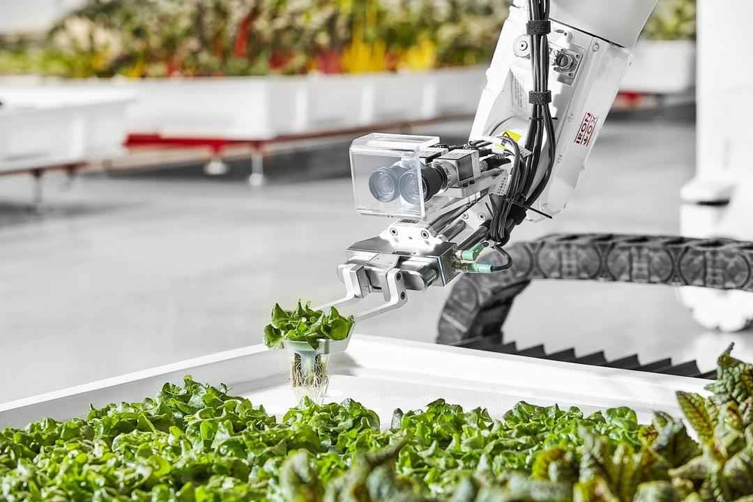 野菜工場のロボット