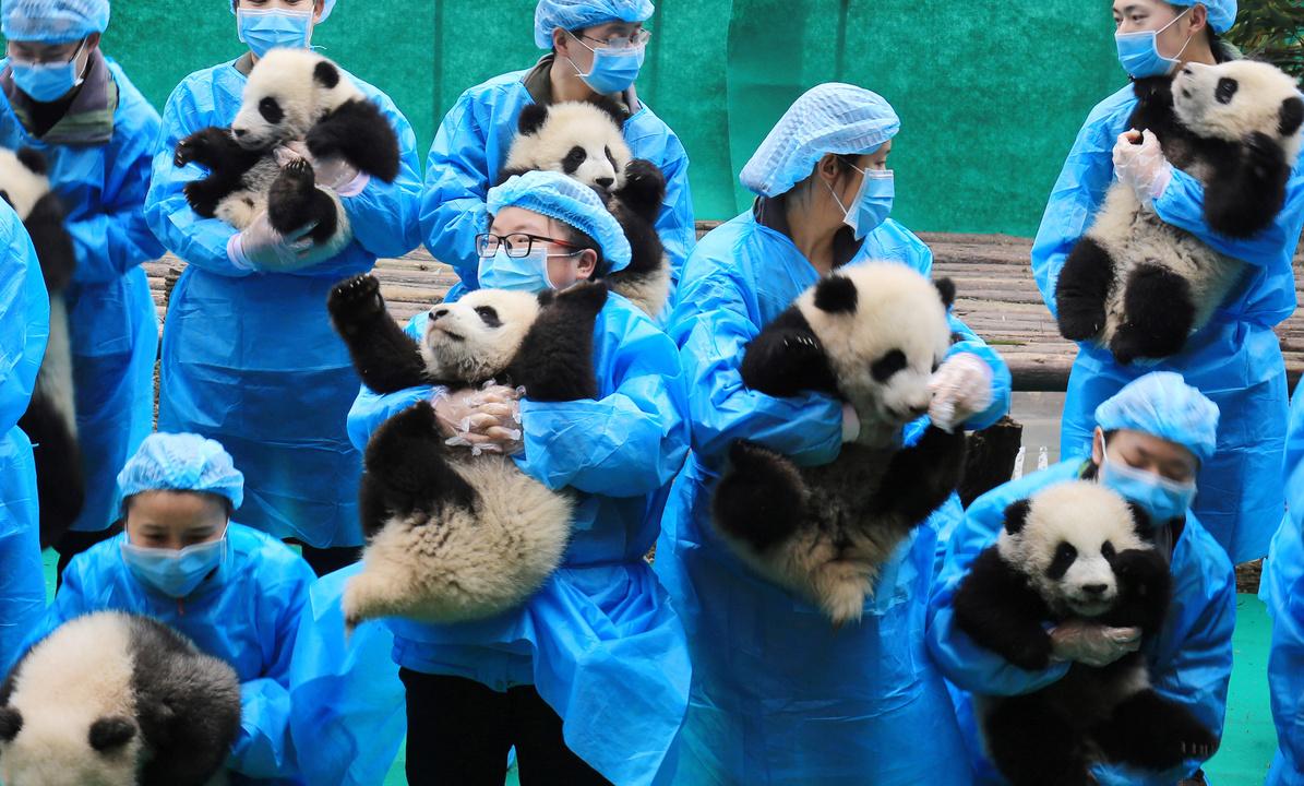 パンダと飼育員