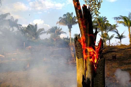 ブラジルのアマゾンでは、今年に入って今までに7万4000回以上の火災が発生している。