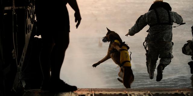 ヘリから飛び降りる兵士と軍用犬