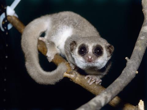 透明なカタツムリ、巨大ネズミ、小さなカエル…ここ10年で発見された ...