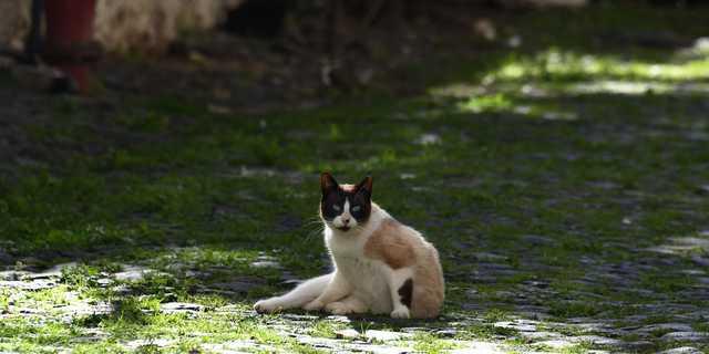 猫 コロナ 感染