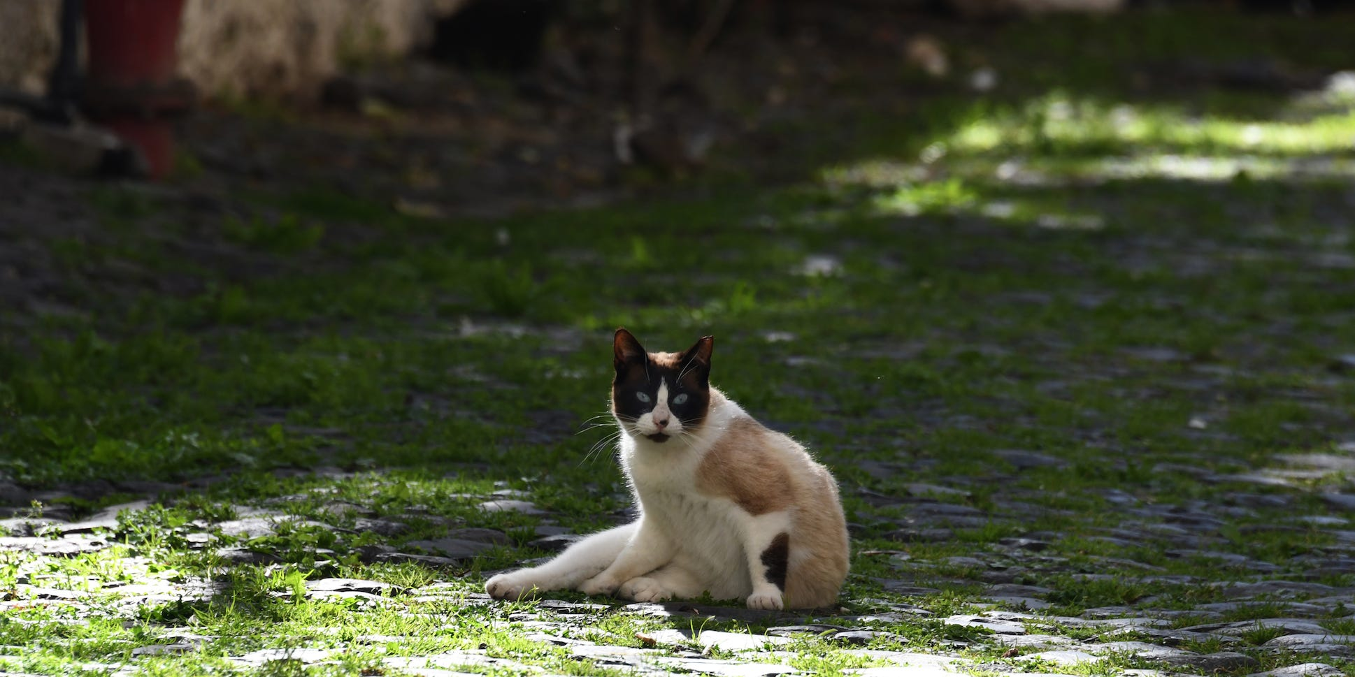 猫 に うつる コロナ