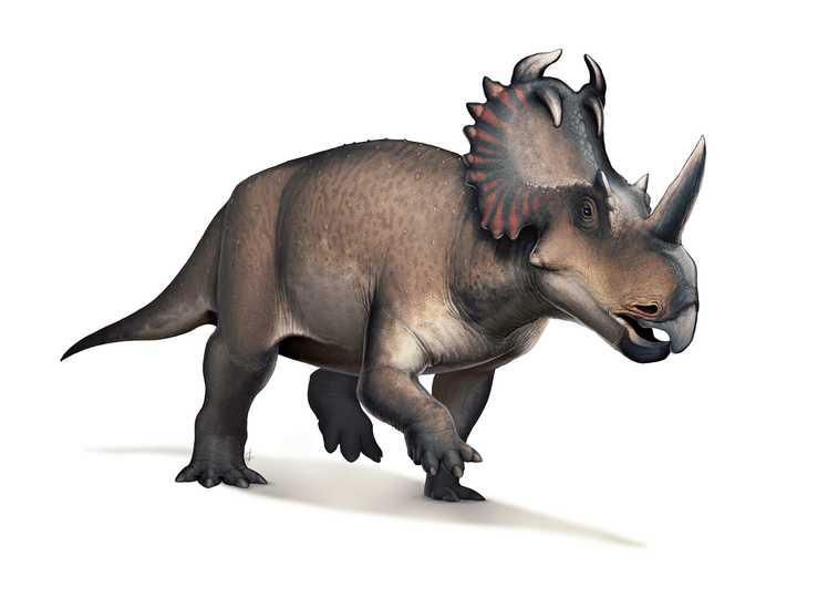 恐竜を初めて「がん」と診断…しかし、死因はがんではなかった | Business ...