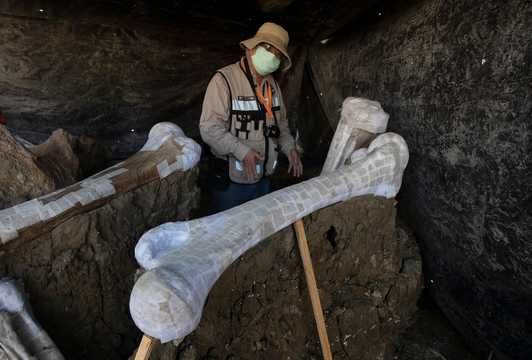 9月3日、メキシコシティの新空港建設現場で発見されたマンモスの骨格を示す国立人類学歴史研究所のルベン・マンザニア・ロペス。