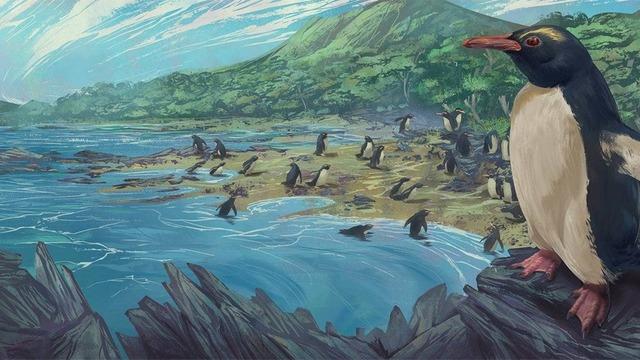 300万年前のニュージーランドに生息していたペンギン「ユーディプテス・アタトゥー」(Eudyptes atatu)の想像図。