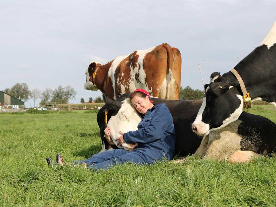オランダ、スパンブルクの「ファームサバイバル」で、牛を抱きしめる女性。