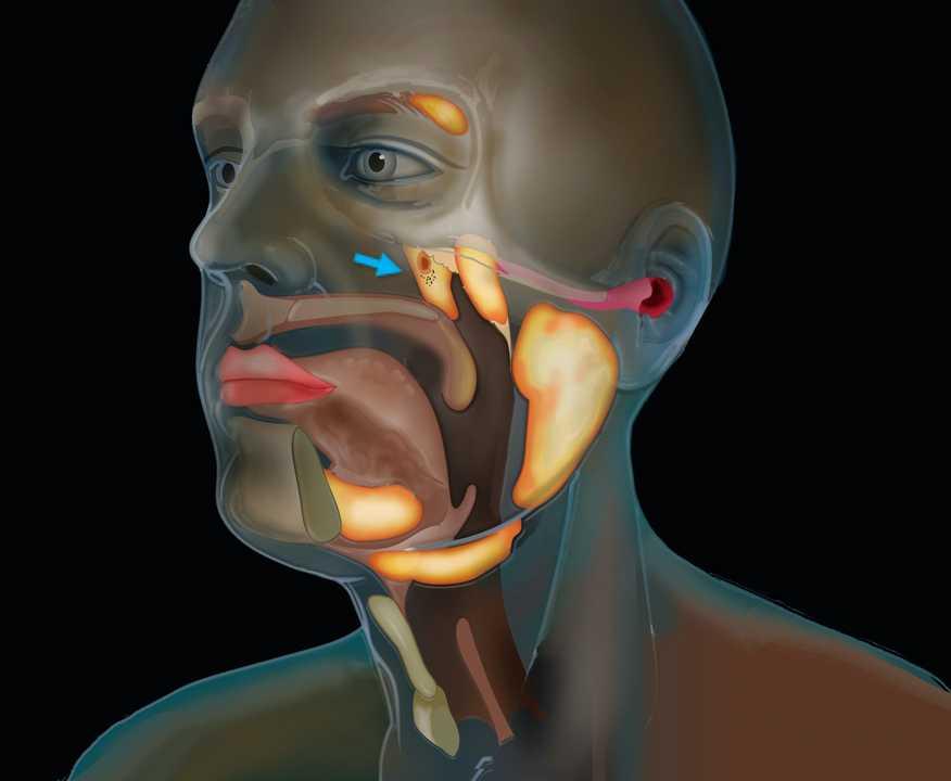 管状腺は鼻腔と咽頭の交差部に位置する。