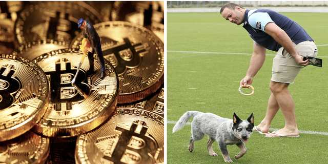 暗号通貨と犬好き