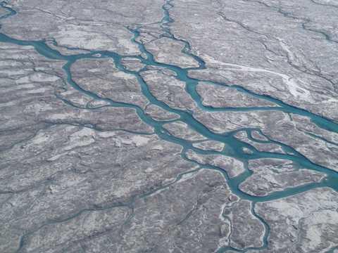 グリーンランドで藻類が繁殖している。