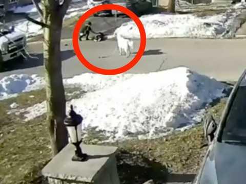 防犯カメラの映像には、犬のクローバーが通りかかったドライバーに助けを求めている様子が映し出されていた。