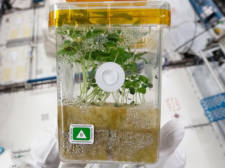 胚芽実験3