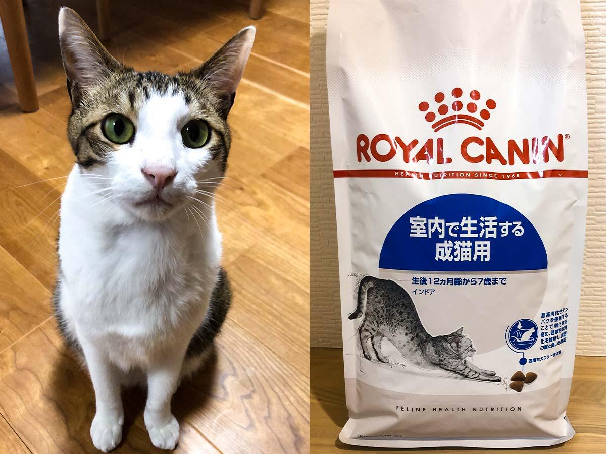 保護猫とキャットフード