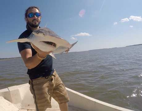 ウチワシュモクザメを手にするブライアン・ケラー。