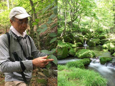 (左)サステナビリティ推進部チーフスペシャリスト・山田健氏。森で葉の形を見て、木の同定をしている。この木はカエデの一種のチドリノキだ。(右)奥大山にある天然水の森。