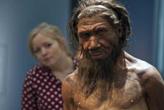 2014年9月、ロンドン自然史博物館の「イギリス:100万年の人類の物語(Britain: One Million Years of the Human Story)」展で展示された20代のネアンデルタール人男性の模型を見る職員。