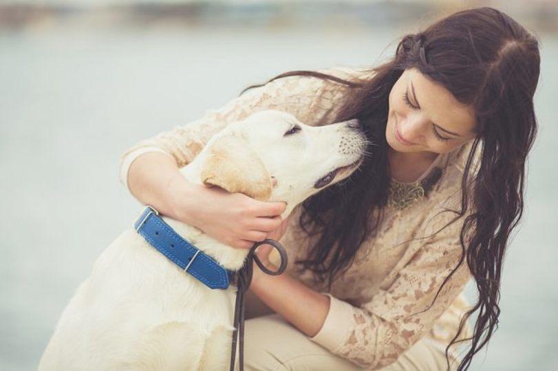 疲れた旅人はいませんか。空港で「癒し犬」がパトロール