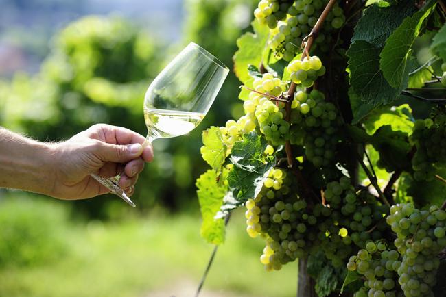 20140519_riesling_wine_1.jpg